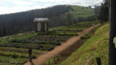 Crop Gardens of Monticello